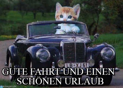Gute fahrt - Cat drives car meme (http://www.memegen.de/meme/p5ruad)