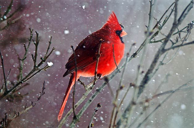 As temperatures dip, look no further than your backyard to see how full of life this blustery season truly is with over 50 beautiful winter bird photos.
