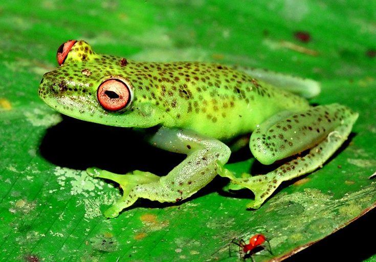 Instituto Rã-bugio para Conservação da Biodiversidade