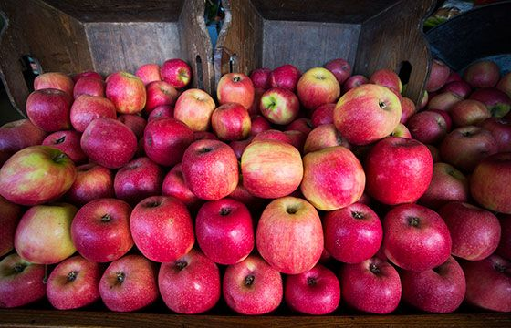 Seasonal crunchy unwaxed royal galas  | The Happy Apple