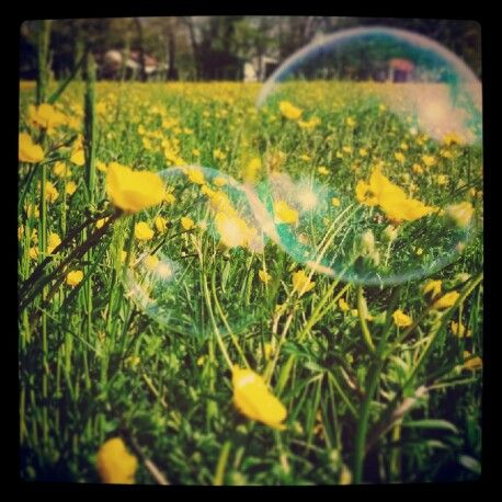 Soap bubble and flowers