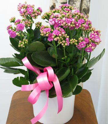 Image result for flowers delivered