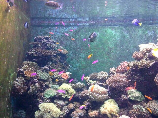 beautiful fishes