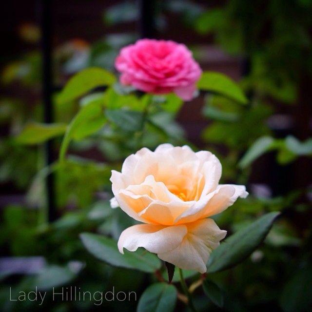 Lady Hillingdon & Leonard da Vinci