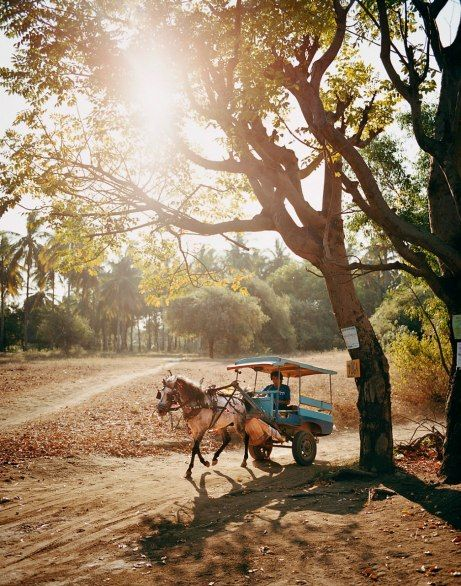 #GILI ISLANDS  No motorized transport on the #Gili Islands. You can walk around the 3 islands in less than an hour. It's only bicycles or horse carts. Place I want to go... again <3