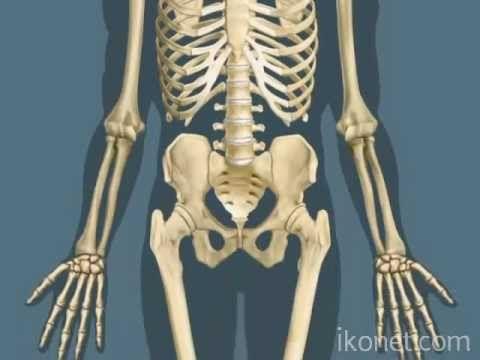 La structure des os