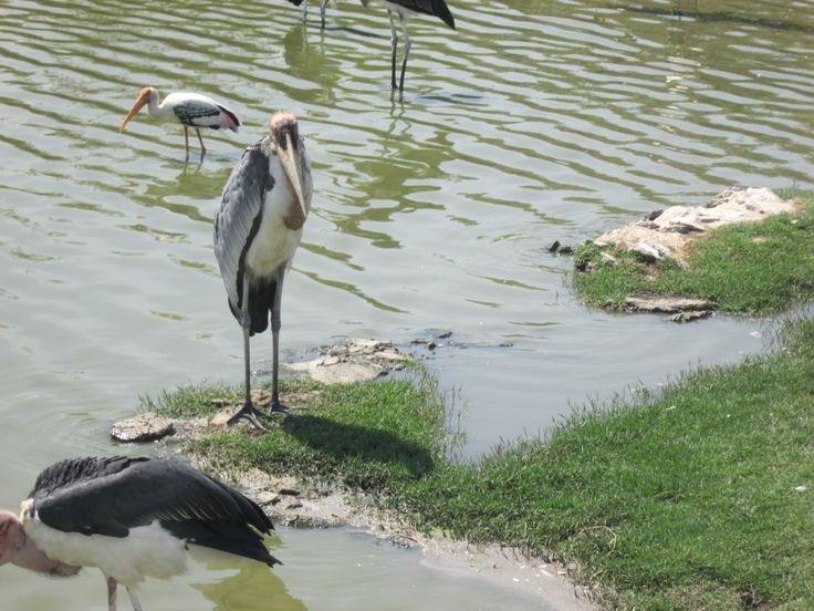 Stork is visiting ;) #travellerhami #travelblogger #fashionblogger
