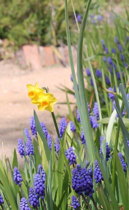 Spring at Buda