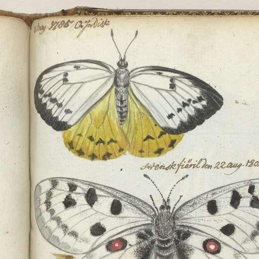 Indische vlinder en Zweedse vlinders, Jan Brandes, , 1785 - 1806 - Diverse-Verzameld werk van apbsen - Alle Rijksstudio's - Rijksstudio - Rijksmuseum