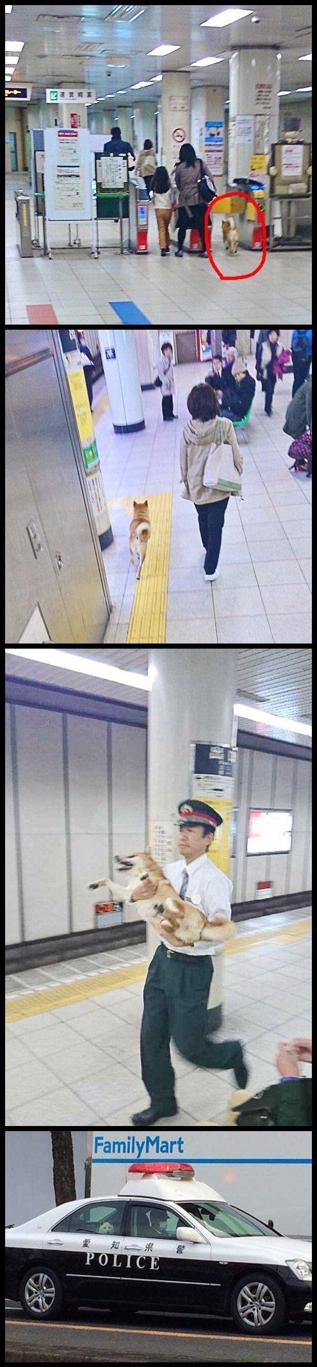 Dog tries to sneak through customs
