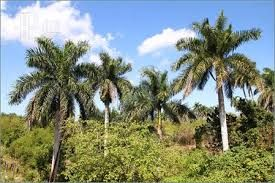 Image result for palm tree in jungle