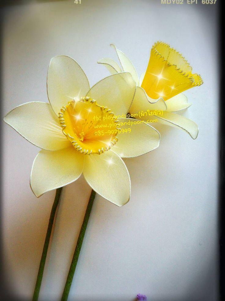 ดอกแดฟโฟดิล (Daffodil) by fb: ployandpoom