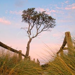Mornington Peninsula summer sky... via That Marketing Company, Card by Jennie
