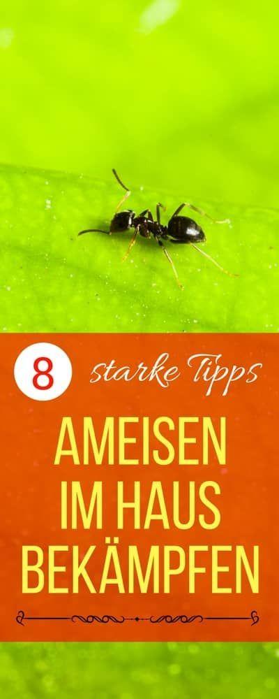 Hilfe, ich habe Ameisen in der Küche... Ameisen im Haus bekämpfen | Haushaltsfee.org