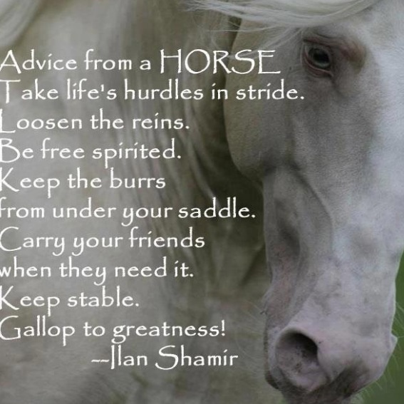 a lovely and inspirational quote horse quotes