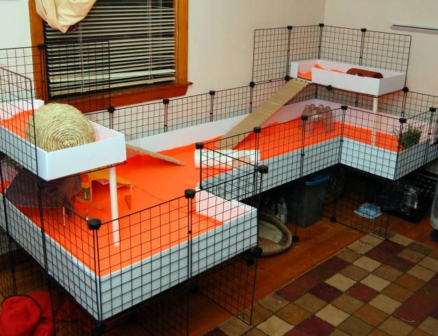 C and c cage layout with lofts guinea pig cage ideas for Coroplast guinea pig cage for sale