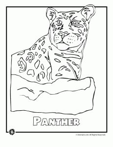 endangered rainforest panth 231x300 9 Most Endangered Rainforest Animals Coloring Pages