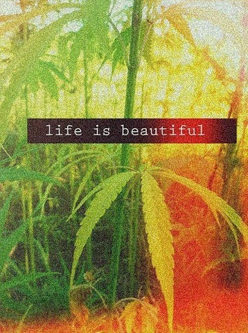 Life is beautiful with weed. You will love it more in edibles you make easily yourself. This book has great recipes for easy marijuana oil, delicious Cannabis Chocolates, and tasty Dragon Teeth Mints: MARIJUANA - Guide to Buying, Growing, Harvesting, and Making Medical Marijuana Oil and Delicious Candies to Treat Pain and Ailments by Mary Bendis, Second Edition. Only 2.99.  www.muzzymemo.com