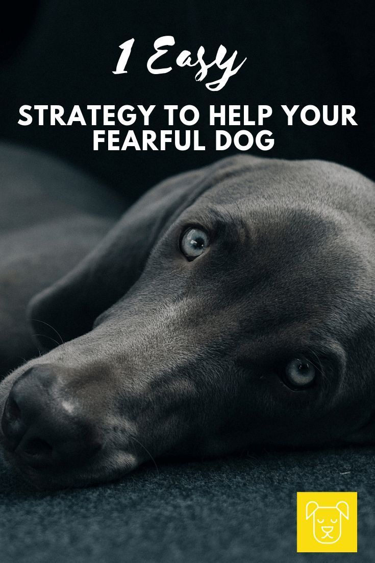 The Proven Way To Help Your Fearful Dog Dog Training Guard Dog