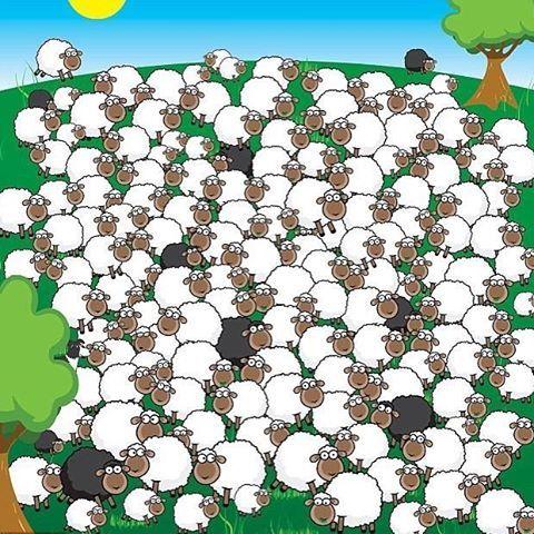 Dierenstarters : Zoek het slapende schaap