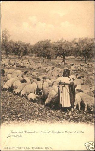 Jerusalem Sheep and Shepherd 1910s