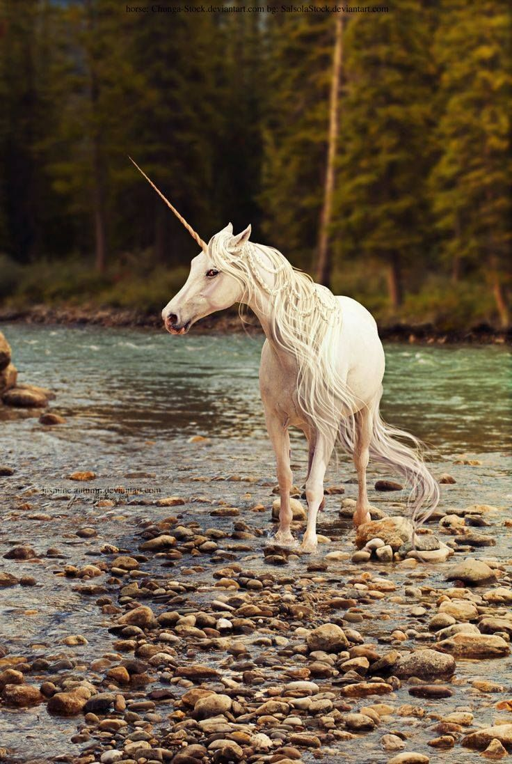 17 Best ideas about Unicorn And Fairies on Pinterest ...