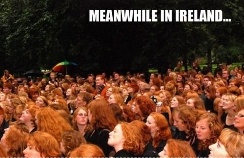 Meanwhile In Ireland...Awesome Gingers unite !: Red Hair, Families Meeting, Funny, Redheads, Gingers, Redhair, People, Meanwhile In, Red Head