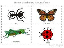 Free printable insect vocabulary cards. #11 Insect unit and/or #21 Butterfly (life cycles) unit