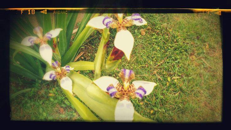 Setembro chegou no meu jardim