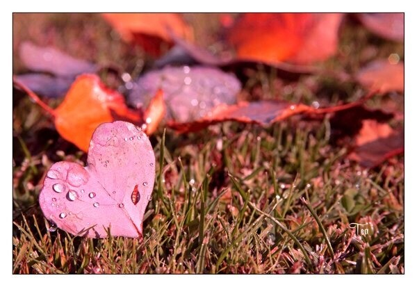 ♥♥♥: Heart Leaf, Heart Heart, Autumn Heart, Heart Everywh, Heart Shape, Heart Art, Natural Heart, Heart Natural