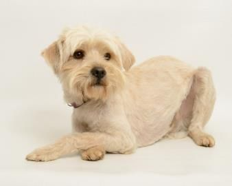 EINSTEIN <3 is 3 yrs. Tibetan Terrier Mix • Adult • Male • Medium. Santa Cruz SPCA Santa Cruz, CA. The Santa Cruz SPCAs adoption package for dogs & cats includes spay/neuter, vaccinations, microchip/registration, an ID tag, collar, coupons, a free health exam, 30 days of free pet health insurance & other animal care materials. Puppies under 1 yr of age are $300, dogs over 1 yr are $200 & senior dogs are $150..