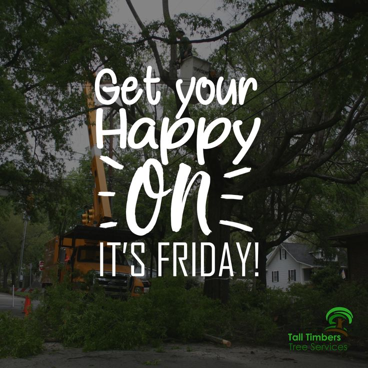 Happy Friday! Let the weekend begin. From tall timbers tree services. Visit →https://talltimberstreeservices.com.au/