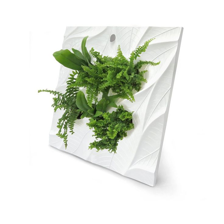 EDELWHITE  The Living Wall   Sage Vertical Garden Systems, LLC