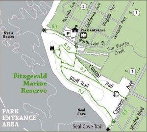 Visit the Tidepools at Fitzgerald marine reserve! 40 mins south of San Francisco