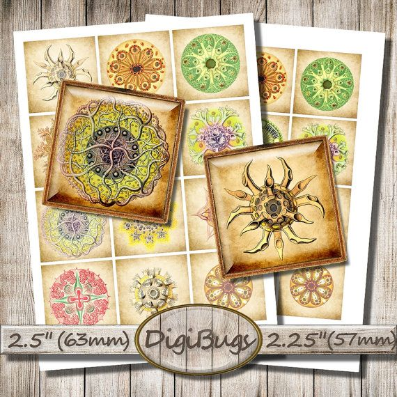 Sea Plankton, Sea Creatures, Digital Collage Sheet, 2.25 inch, 2.5 inch Squares for Magnets, Sea Decoupage Images, Printable Download, b3