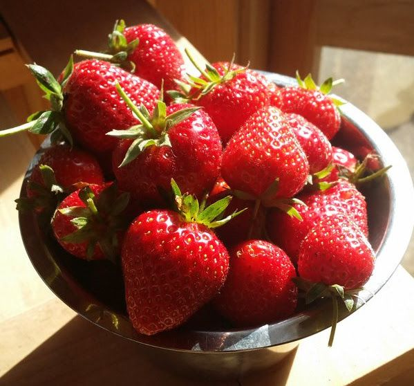 Christmas morning: freshly picked strawberries