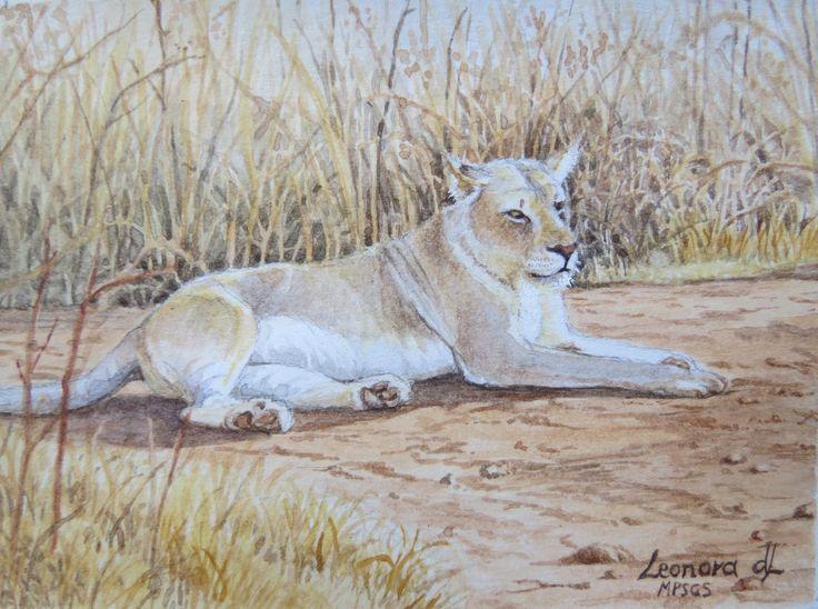 """Leonora de Lange ' Lioness"""" Miniature watercolour 75 x 55mm"""