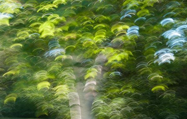 Trees by Charlene Sollen Kenna, via Behance