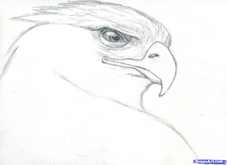realistic draw eagle step drawings drawing golden animals easy animal pencil dragoart cool beginners steps sketch sketches bird eagles birds