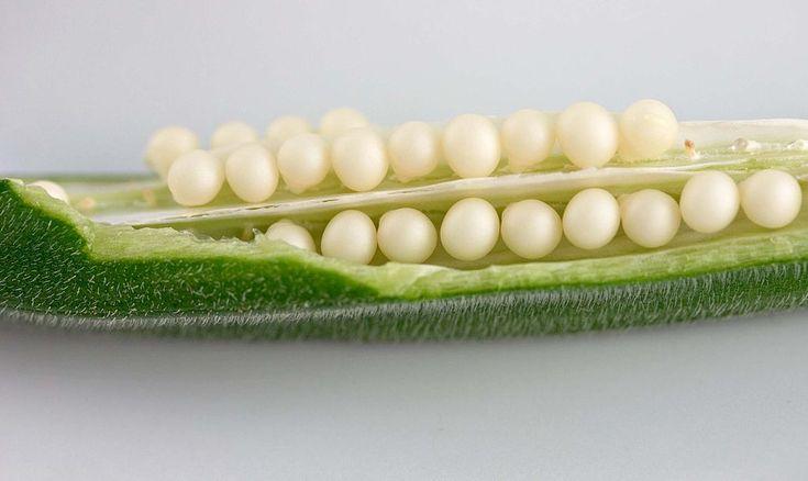 Okra zabíjí až 72% buněk rakoviny prsu. Znáte tuto zeleninu?
