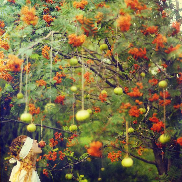 apples: Fall Parties, Lissi Elle, Autumn, Trees Of Life, Colors Palettes, Apples, Photography, Parties Games, Snow White