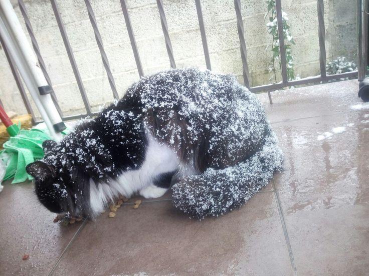 Snowcat !!! (Μένιος)