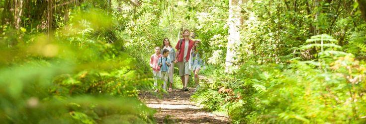 Dandenong Ranges - great for walks/hiking/picnics