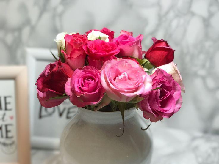 Rosa Rosen passend zum Frühlingsbeginn ...