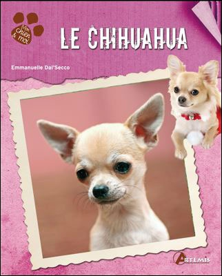 Healthy Dog Food Recipes For Chihuahuas