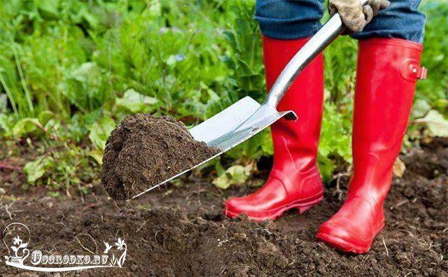 5 законов ЭКОЗЕМЛЕДЕЛИЯ Первый шаг к органическому земледелию (которое сегодня очень популярно) - полный отказ от применения химии на своем огороде. 1) Сееем СИДЕРАТЫ. Сидерация - один из основных способов повысить плодородие почвы. Сидераты выращивают для получения органической массы, которая в дальнейшем служит источником питания для почвенных микроорганизмов. Именно они делают почву плодородной и питают растения. Другие полезные свойства сидератов: http://ogorodko.ru/category/ogorod...