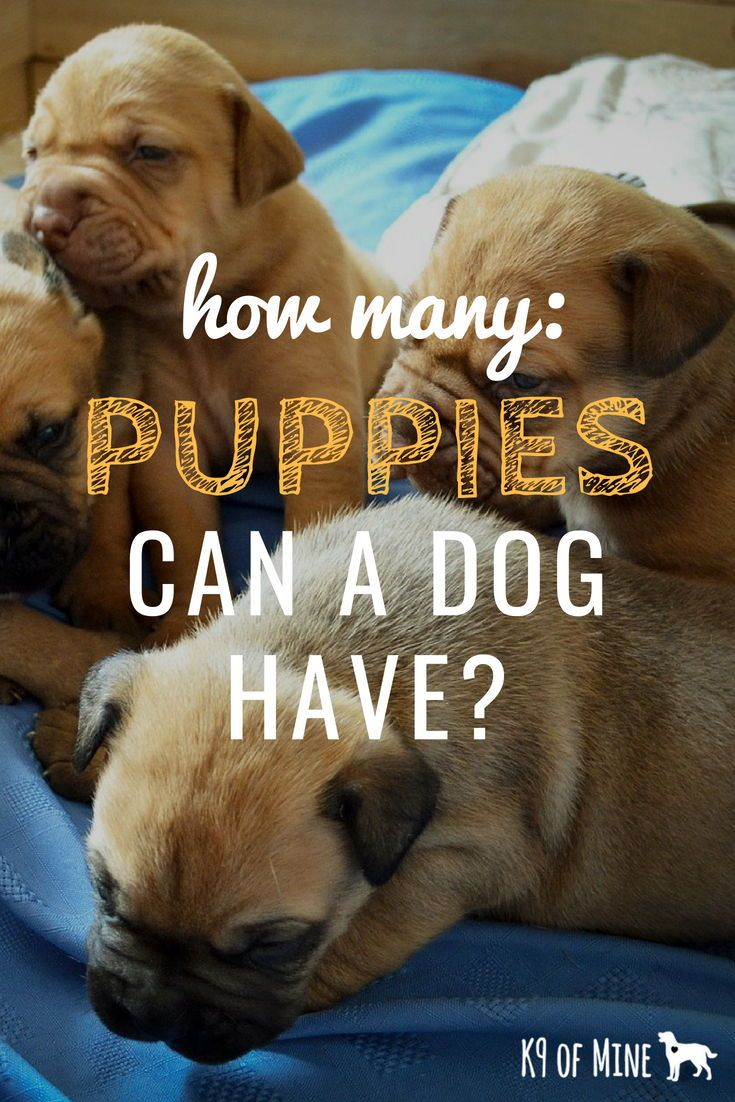 How Many Puppies Can Dogs Have Litter Size Influential Factors
