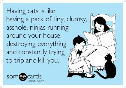Having cats is like having a pack of tiny, clumsy, a**hole, ninjas running around your house destroying everything and constantly trying to trip and kill you. Rob's daily sentiments.
