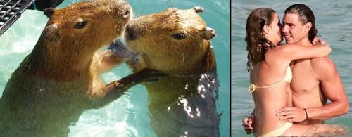 couple of capybaras