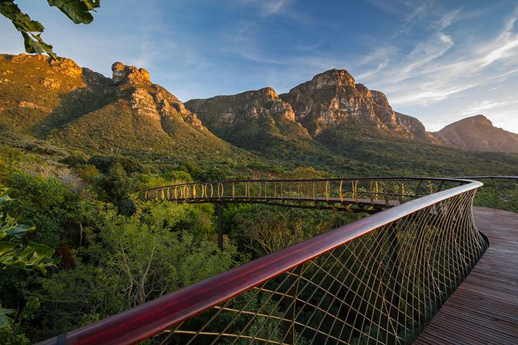 Kirstenbosch is a famous botanical garden nestled at the eastern foot of Table Mountain in Cape Town. The garden is one of nine National Botanical Gardens covering five of South Africa's six different biomes. Canopy Walkway above the trees in Cape Town